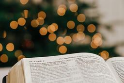 Open Bible in Front of the Christmas Tree  image 3