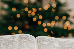 Open Bible in Front of the Christmas Tree  image 4