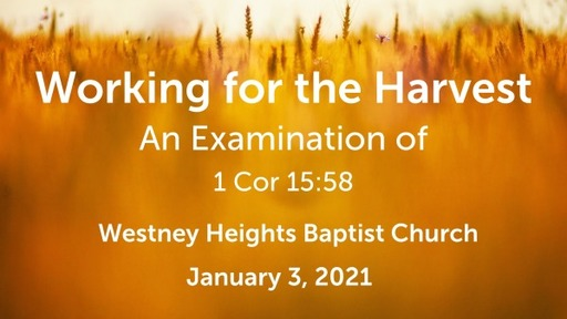 Working for the Harvest: An Examination of 1 Corinthians 15:58