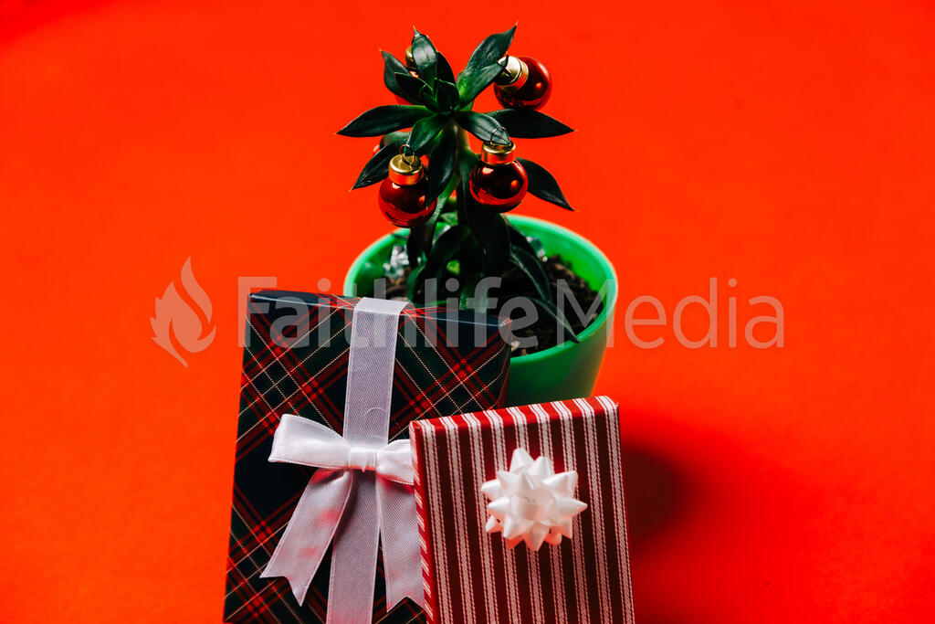 Tropical Plant with Christmas Ornaments and Gifts large preview