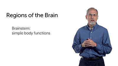 Three Main Parts of the Human Brain