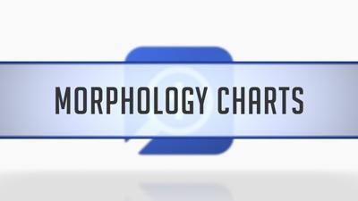 Morphology Charts