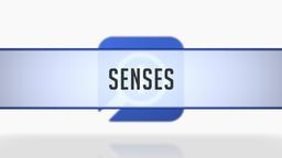 Word Senses