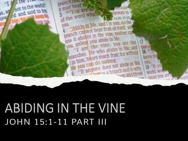 Abiding In The Vine Pt. 3