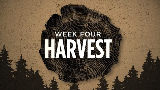 Rooted Week 4 : HARVEST