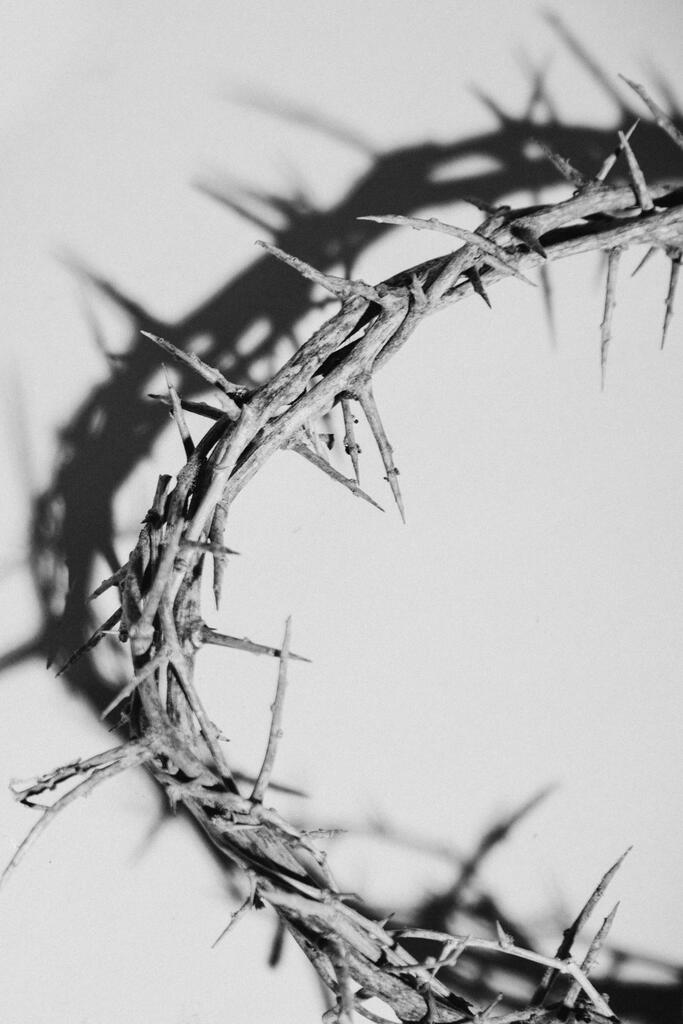 Crown of Thorns large preview