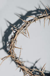 Crown of Thorns  image 3
