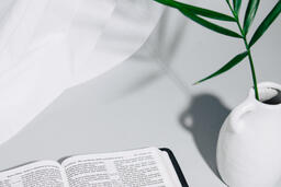 Open Bible with Plant  image 2