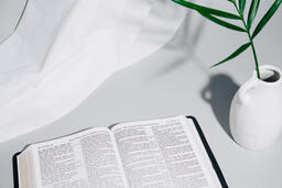 Open Bible with Plant  image 1