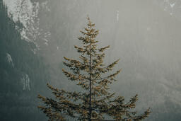 A Tree in the Fog  image 2