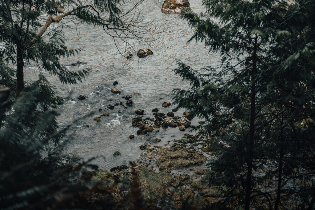 Body of Water in the Forest large preview