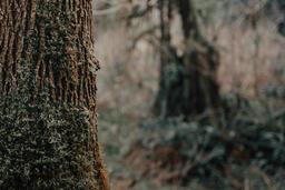 Tree Trunk  image 2