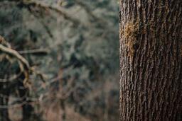 Tree Trunk  image 1