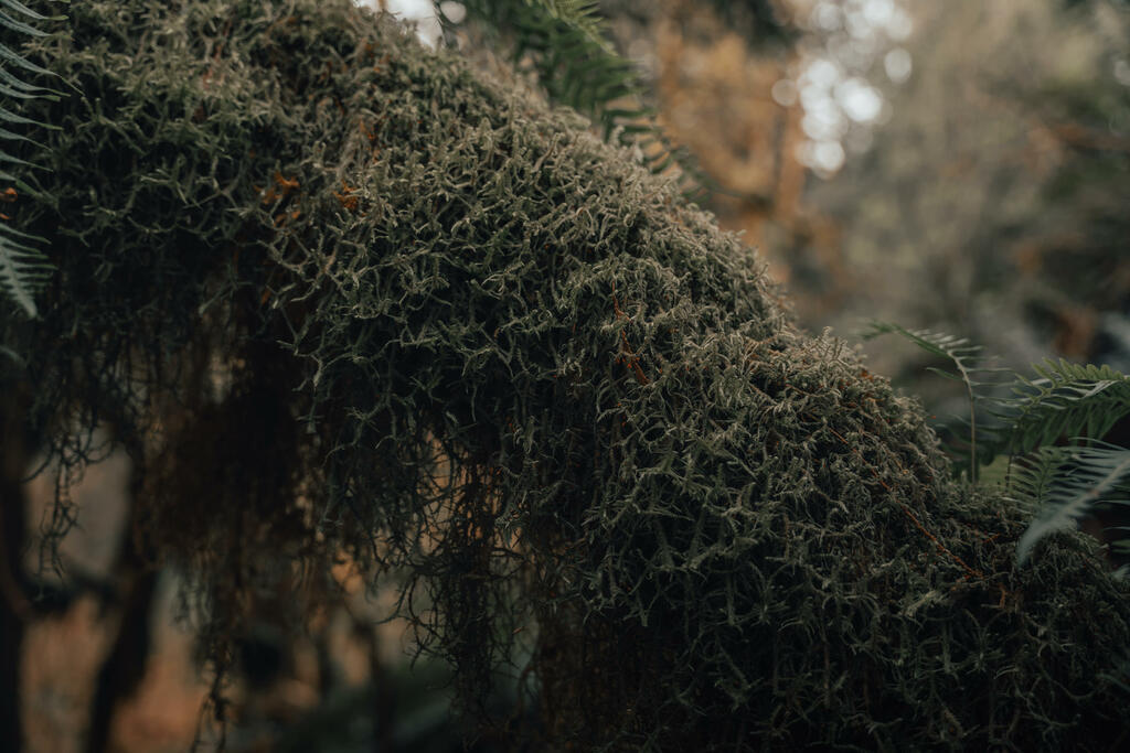 Mossy Tree Branch large preview