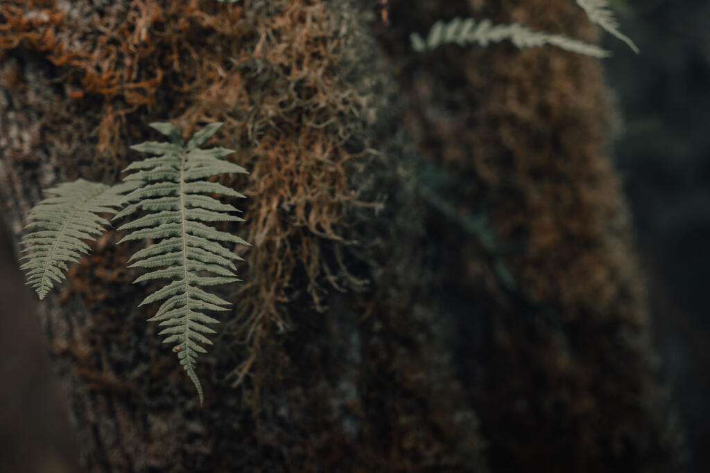 Fern large preview