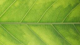 Green Leaf  image 4