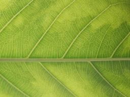 Green Leaf  image 5