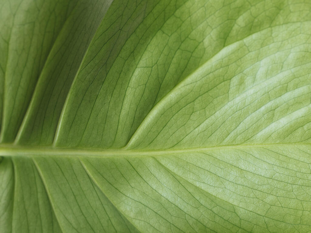 Green Leaf large preview