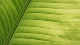Green Leaf  image 2