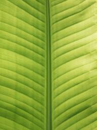 Green Leaf  image 7