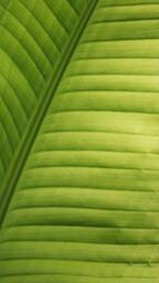 Green Leaf  image 6