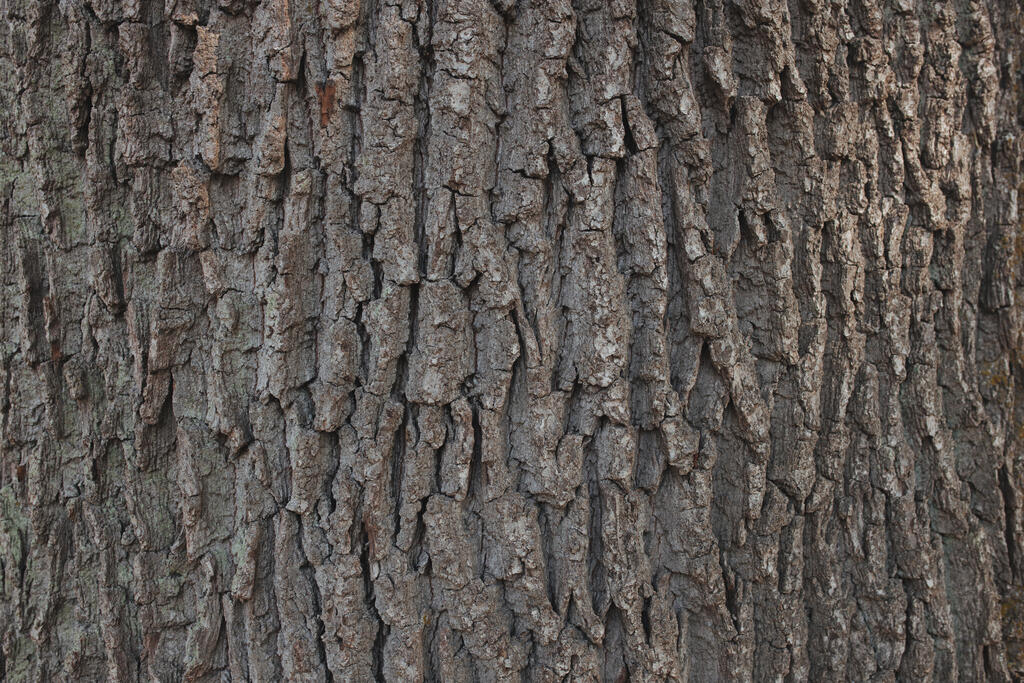 Tree Bark Texture large preview