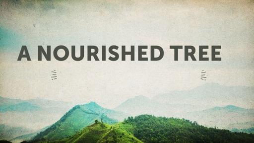 A Nourished Tree