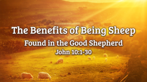 The Benefits of Being Sheep