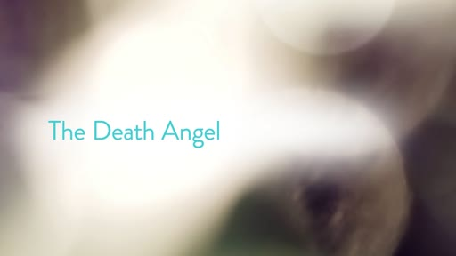 The Death Angel