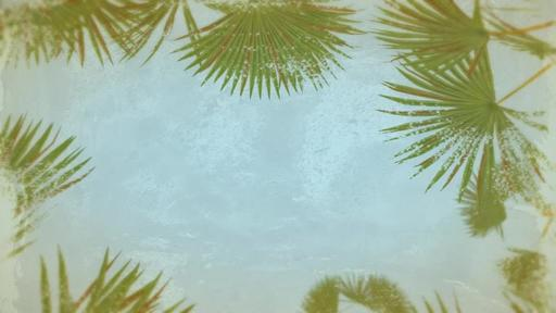 Summer Palm Leaves - Content Motion
