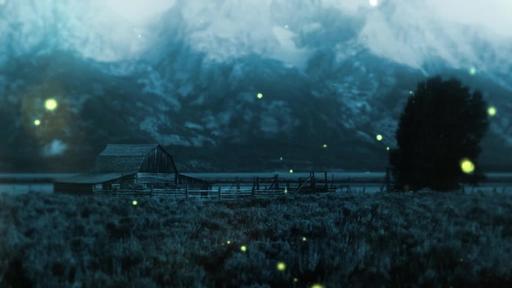 Summer Night Fireflies - Content - Motion
