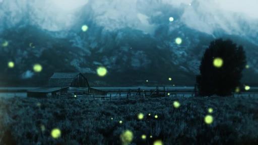 Summer Night Fireflies - Countdown 3 min