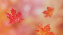 Falling Leaves header subheader 16x9 PowerPoint Photoshop image