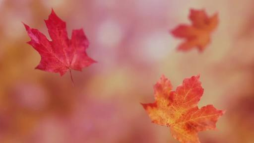 Falling Leaves - Content - Motion